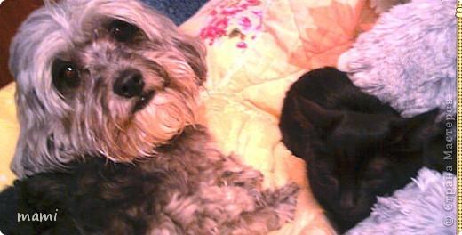 Начну с этого товарища))) Нашли его с собакой, около дома избили его мальчишки!!!!((((((((( фото 4