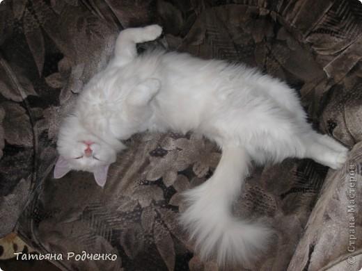 """Очень понравилась фотография Катерины Коробчук """"Уморилась"""", и вспомнила, что у нас тоже есть подобный кадр. Вот, это моя Масяня))) фото 2"""