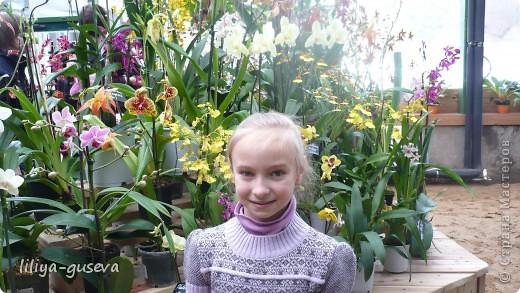 А орхидеи не пахнут. фото 1