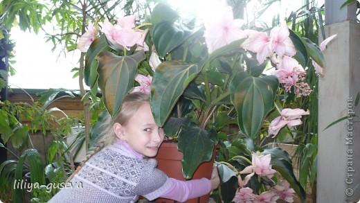 А орхидеи не пахнут. фото 5