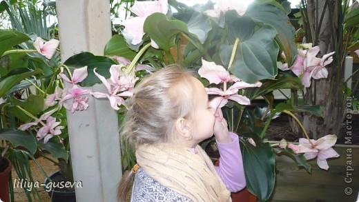 А орхидеи не пахнут. фото 4