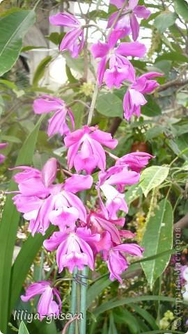 А орхидеи не пахнут. фото 2