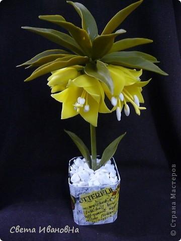 Вот рябчики я люблю, чего не могу сказать об орхидее! Поэтому лепила их с огромным удовольствием! Не совершенство конечно, зато есть к чему стремиться. фото 1