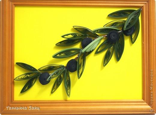 Ветка оливы. фото 1