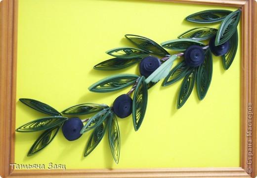 Ветка оливы. фото 2