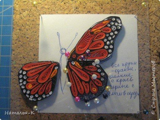 Моя первая бабочка - Монарх. Монарх обитает в тропиках и  субтропиках по всему свету. фото 2