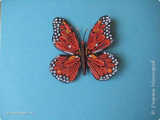 Моя первая бабочка - Монарх. Монарх обитает в тропиках и  субтропиках по всему свету. фото 1