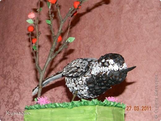 Птица трясогузка для конкурса в детский садик фото 6