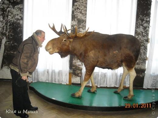 Приглашаем побродить с нами по залам Полтавского краеведческого музея :) фото 6