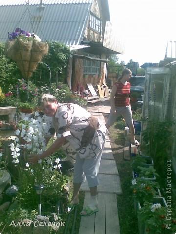 Мы фото цветок очиток ветераны начали