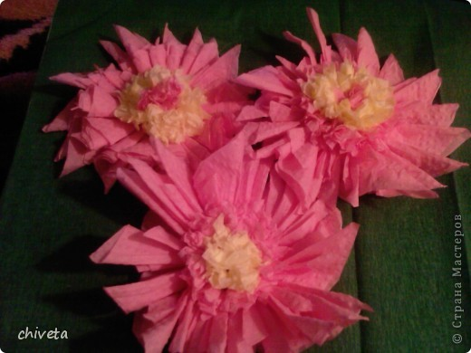 Мои первые цветы фото 3