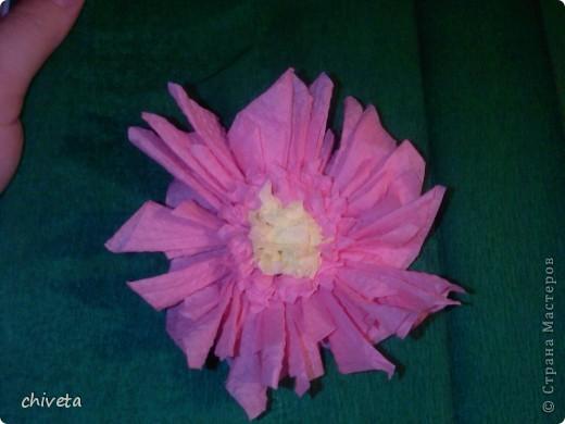 Мои первые цветы фото 6