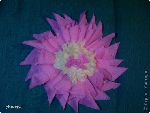 Мои первые цветы фото 5