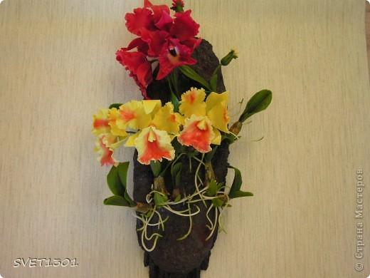 Слепила ещё одну орхидею и решила оформить её вместе с бордовой на кусок дерева и повесить на стену . фото 1