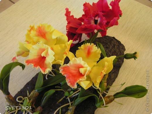 Слепила ещё одну орхидею и решила оформить её вместе с бордовой на кусок дерева и повесить на стену . фото 4