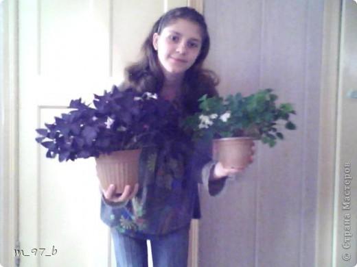 Цветочки!!! фото 1