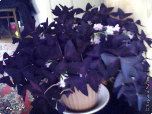 Цветочки!!! фото 2