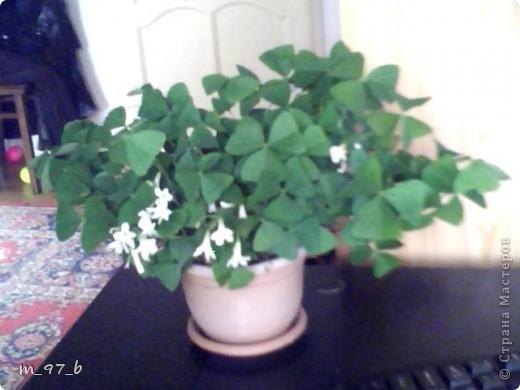 Цветочки!!! фото 3