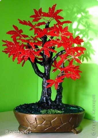 Захотелось сделать дерево по фото, причем искала именно сочетание красного и зеленого. Как оказалось, это не так просто, результат нельзя назвать копией живого дерева, но ... в чем-то бисерное даже лучше)))  Кстати, даже не знаю, как оно называется...   фото 3