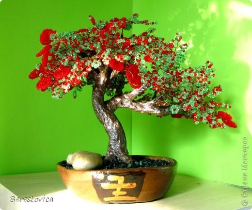 Захотелось сделать дерево по фото, причем искала именно сочетание красного и зеленого. Как оказалось, это не так просто, результат нельзя назвать копией живого дерева, но ... в чем-то бисерное даже лучше)))  Кстати, даже не знаю, как оно называется...   фото 2