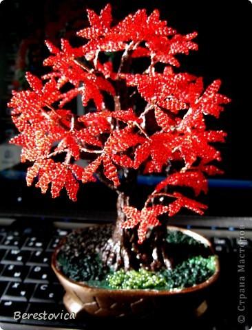 Захотелось сделать дерево по фото, причем искала именно сочетание красного и зеленого. Как оказалось, это не так просто, результат нельзя назвать копией живого дерева, но ... в чем-то бисерное даже лучше)))  Кстати, даже не знаю, как оно называется...   фото 4