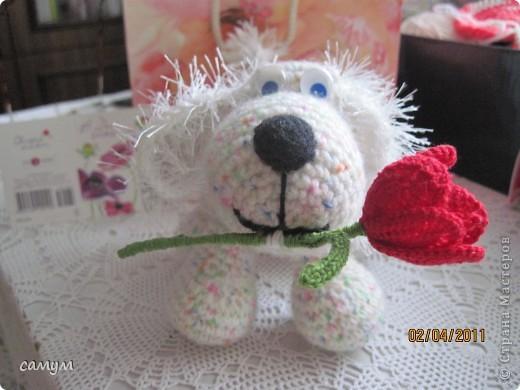 дружок и цветочек фото 2