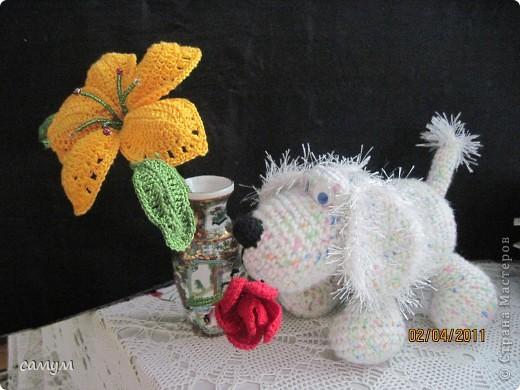 дружок и цветочек фото 3