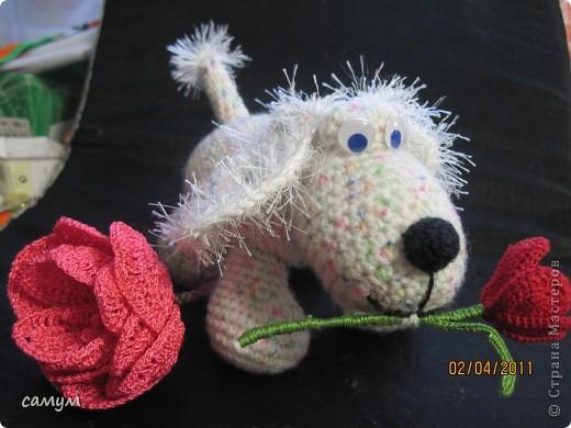 дружок и цветочек фото 5