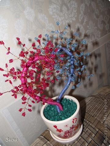 Моё дерево фото 2