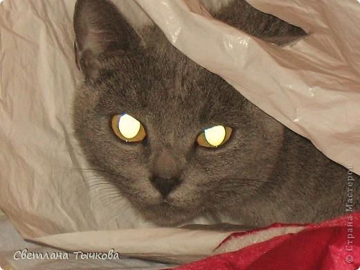 Бонифаций-кот серьёзный,упитанный,любит фотографироваться, фото 4