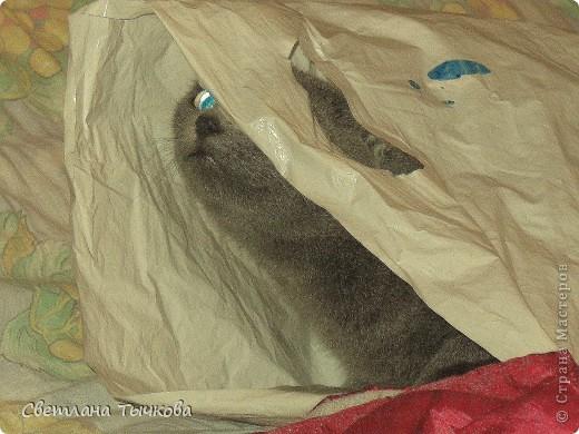 Бонифаций-кот серьёзный,упитанный,любит фотографироваться, фото 5