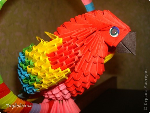 Попугай на жёрдочке фото 3