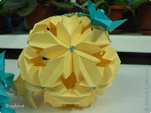 Leroy's Chrysantemum фото 3