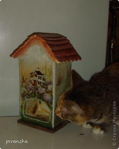 Ну вот и у меня есть домик для чайных пакетиков, только рыжая не понимает что ЭТО. фото 1