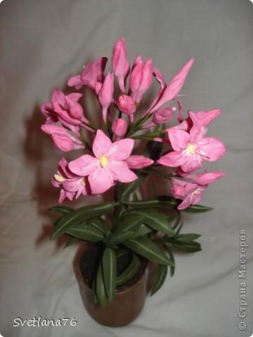 Хотела слепить олеандр, цветы никак не получились, видимо воображения не хватило. фото 1