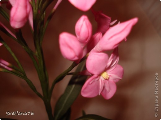 Хотела слепить олеандр, цветы никак не получились, видимо воображения не хватило. фото 4