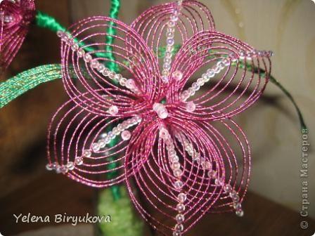 Розовая лиллия фото 4