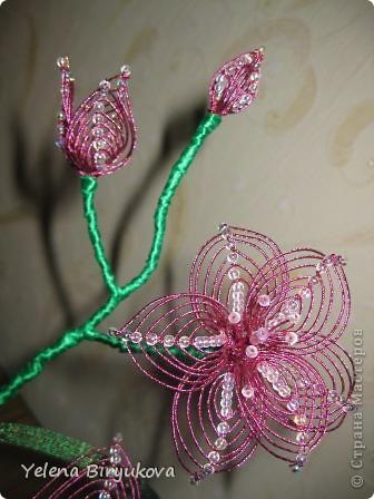 Розовая лиллия фото 3