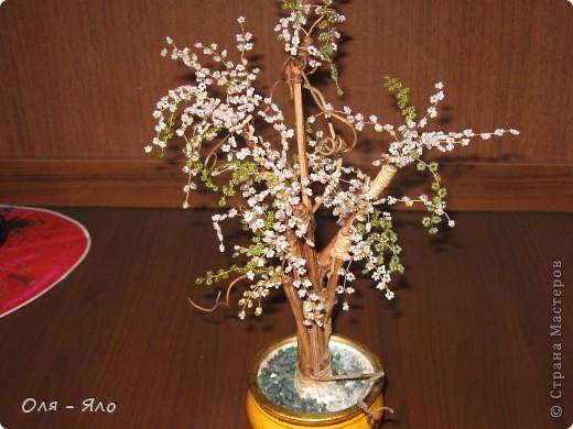 Весеннее дерево. фото 2