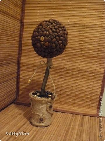 А вот и моё кофейное дерево!