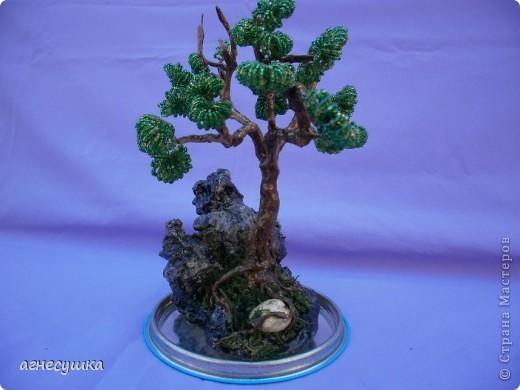 Дерево на камне. фото 2