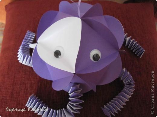 мои осьминоги фото 2