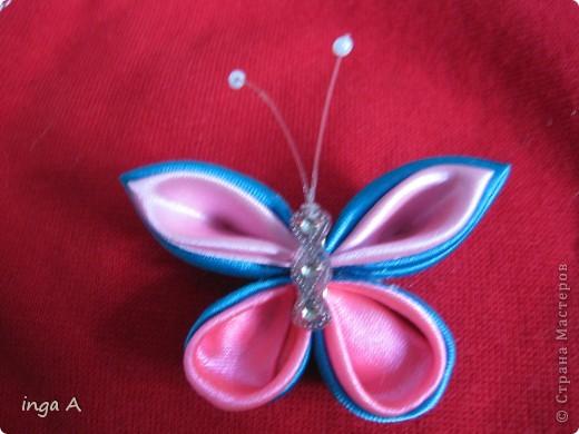 первая бабочка фото 1