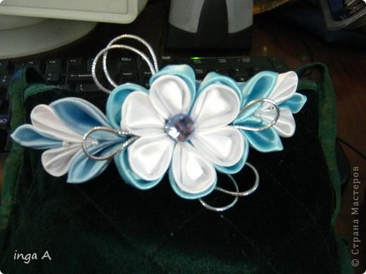 первая бабочка фото 2