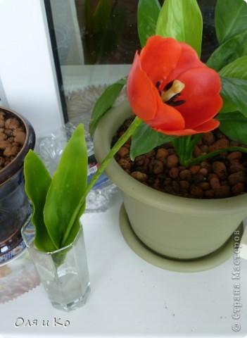 Представляю на ваш суд свой первый цветок из самоварного холодного фарфора. Лепила по МК с сайта Валентины http://www.clayart.com.ua/index.php?option=com_kunena&func=view&catid=5&id=175&Itemid=42 . Низкий поклон этой талантливой и щедрой мастерице. До ее цветов мне очень далеко, но я буду стараться. Все каттеры и молды, которые я использовала самодельные - спасибо Юле за то, что учит проявлять смекалку во всем http://stranamasterov.ru/node/138936 . Ну и, конечно, отдельное спасибо Светлане за идеальный рецепт http://stranamasterov.ru/node/142186 . Хоть масса и получилась с комочками, это оказалось вполне решаемо (спасибо, девочки, за подсказку http://stranamasterov.ru/node/174489 ). фото 8