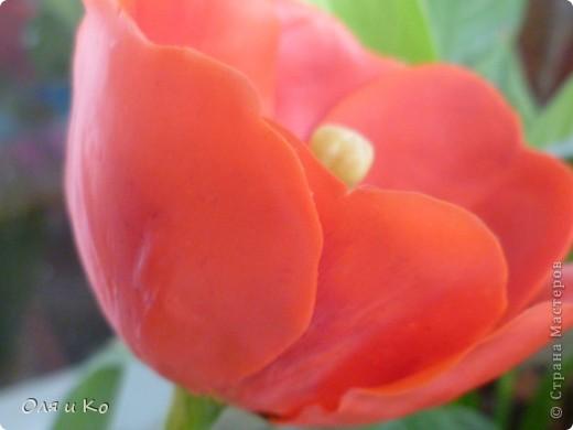 Представляю на ваш суд свой первый цветок из самоварного холодного фарфора. Лепила по МК с сайта Валентины http://www.clayart.com.ua/index.php?option=com_kunena&func=view&catid=5&id=175&Itemid=42 . Низкий поклон этой талантливой и щедрой мастерице. До ее цветов мне очень далеко, но я буду стараться. Все каттеры и молды, которые я использовала самодельные - спасибо Юле за то, что учит проявлять смекалку во всем http://stranamasterov.ru/node/138936 . Ну и, конечно, отдельное спасибо Светлане за идеальный рецепт http://stranamasterov.ru/node/142186 . Хоть масса и получилась с комочками, это оказалось вполне решаемо (спасибо, девочки, за подсказку http://stranamasterov.ru/node/174489 ). фото 7