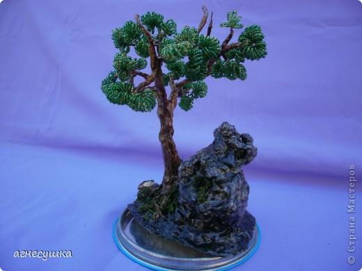 Дерево на камне. фото 1