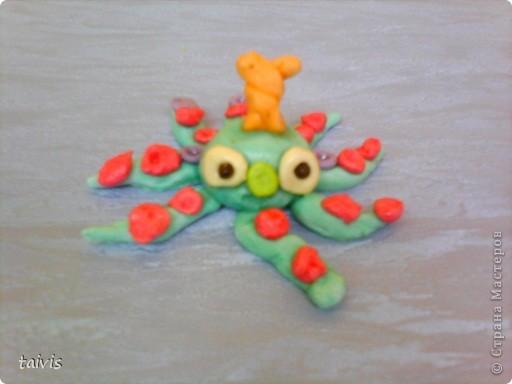 Разноцветные осьминоги. фото 4