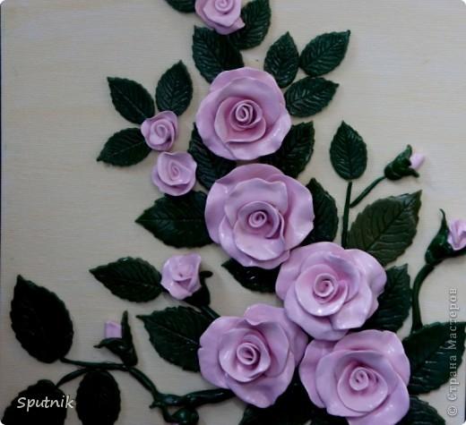 Куст чайной розы фото 2