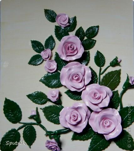 Куст чайной розы фото 1